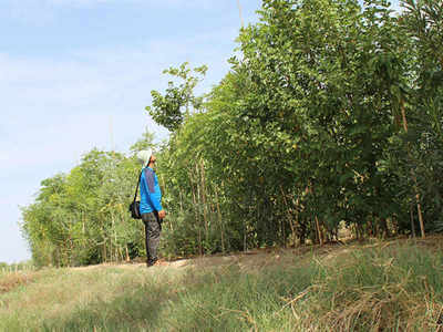 Chennai Corporation transforms dump yard into a mini forest